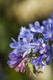 Flores pequenas bonitas na natureza Fotos de Stock