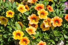Flores pequenas bonitas na natureza Imagens de Stock Royalty Free