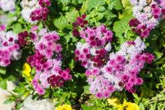 Flores pequenas bonitas na natureza Imagem de Stock