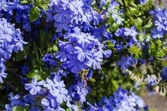 Flores pequenas bonitas na natureza Imagem de Stock Royalty Free