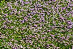 Flores pequenas bonitas na natureza Foto de Stock Royalty Free