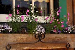 Flores pequenas coloridas Foto de Stock