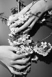 Flores pequenas da cereja nas mãos Imagens de Stock Royalty Free