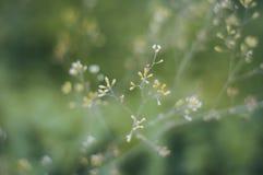 Flores pequenas de florescência imagem de stock