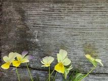 Flores pequenas do verão no fundo de madeira foto de stock royalty free