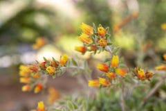Flores pequenas em um jardim na ilha de Skopelos, Gr?cia fotografia de stock