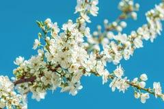 Flores pequenas em uma árvore de fruto Imagem de Stock