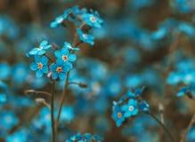 Flores pequenas encantadores azuis, cerceta tonificada e laranja foto de stock royalty free