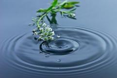 Flores pequenas - gota de água Fotografia de Stock