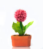 Flores pequenas no potenciômetro Imagens de Stock