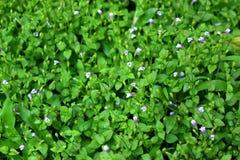 Flores pequenas tropicais e folha verde para o fundo Foto de Stock
