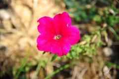 Flores pequenas vermelhas Fotografia de Stock Royalty Free