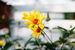 Flores perennes decorativas Imagenes de archivo