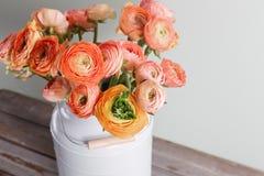 Flores persas anaranjadas y amarillas del ranúnculo ranúnculo en la poder gris del vintage, espacio de la copia Foto de archivo libre de regalías