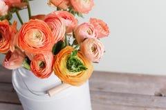Flores persas anaranjadas y amarillas del ranúnculo ranúnculo en la poder gris del vintage, espacio de la copia Fotografía de archivo