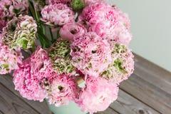 Flores persas rosadas del ranúnculo Ranúnculo rizado de la peonía en la poder verde del vintage, espacio de la copia Foto de archivo