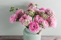Flores persas rosadas del ranúnculo Ranúnculo rizado de la peonía en la poder verde del vintage, espacio de la copia Imagenes de archivo
