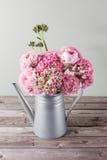 Flores persas rosadas del ranúnculo Ranúnculo rizado de la peonía en la regadera gris metálica del vintage, espacio de la copia Imagenes de archivo