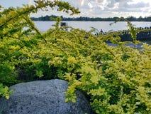 Flores perto do lago Imagem de Stock