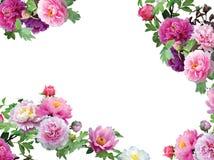 Flores Pinky isoladas, frame floral da orquídea Fotos de Stock Royalty Free