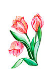 flores pintadas com aquarelas ilustração stock