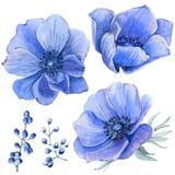 Flores pintadas a mano de la acuarela fijadas en estilo del vintage Foto de archivo libre de regalías