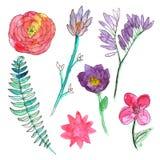 Flores pintadas a mano de la acuarela Sistema de plantas únicas Fotos de archivo