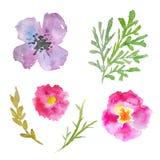 Flores pintadas a mano de la acuarela Sistema de plantas únicas Imagenes de archivo