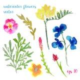 Flores pintadas a mano de la acuarela Sistema de plantas únicas Foto de archivo libre de regalías