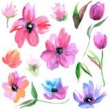 Flores pintados à mão da aquarela bonito Elementos para o projeto invitation Cartão de casamento Cartão de aniversário ilustração do vetor