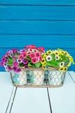 Flores plásticas Foto de Stock