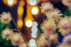 Flores plásticas artificiais bonitas decoradas nas cafetarias imagens de stock royalty free