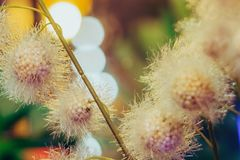 Flores plásticas artificiais bonitas decoradas nas cafetarias imagem de stock royalty free