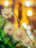 Flores plásticas artificiais bonitas decoradas nas cafetarias imagens de stock