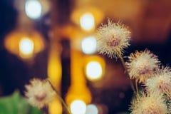Flores plásticas artificiais bonitas decoradas nas cafetarias fotografia de stock