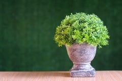 Flores plásticas de la planta verde en el fondo verde, pared, textura Imágenes de archivo libres de regalías