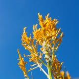 Flores, planta Imagen de archivo