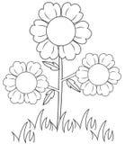 Flores plantadas Imagen de archivo