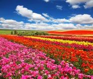 Flores plantadas com faixas Foto de Stock Royalty Free