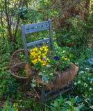 Flores plantadas en asiento de la silla antigua Fotografía de archivo libre de regalías