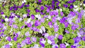 Flores plantadas en el macizo de flores almacen de video