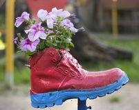 Flores plantadas en un zapato rojo viejo Imágenes de archivo libres de regalías