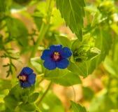 Flores/plantas Imagenes de archivo