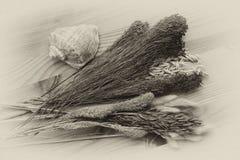 Flores, plantas e hierbas secadas hermosas, cáscara del mar, estilo retro Imagenes de archivo