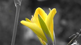 Flores, plantas florecientes, naturaleza