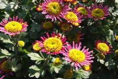 Flores por el lago del oeste imagen de archivo