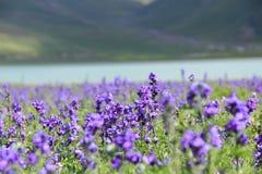 Flores por el río imagen de archivo libre de regalías