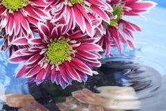 Flores por encima de la superficie Imagen de archivo libre de regalías