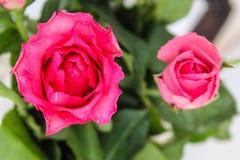 Flores por la mañana fotos de archivo