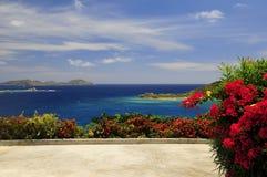 Flores por la playa Imagen de archivo